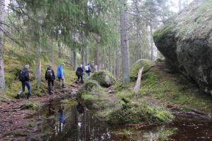 Skogen Tiveden